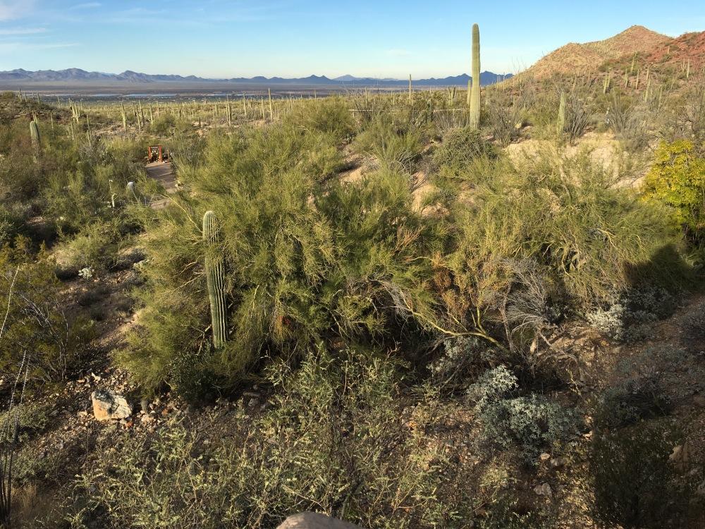 Arizonia-Sonora Desert Museum