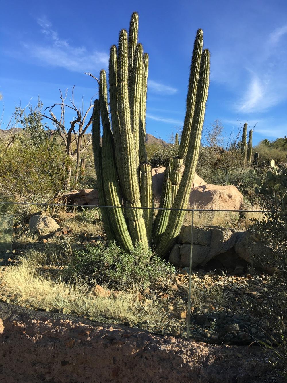 Arizona-Sonora Desert Museum, Tucson, AZ