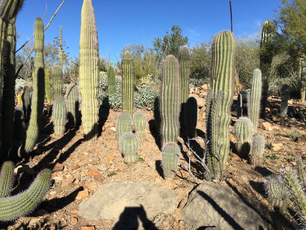 Arizona-SonoraDesert Museum, Tucson, AZ