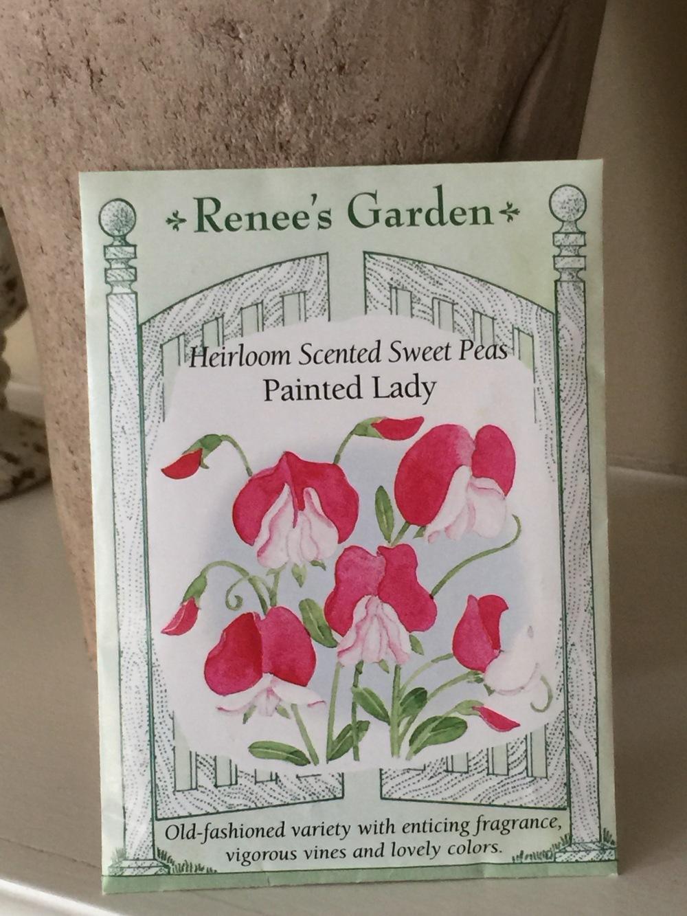Panted Lady Sweet Pea Seeds