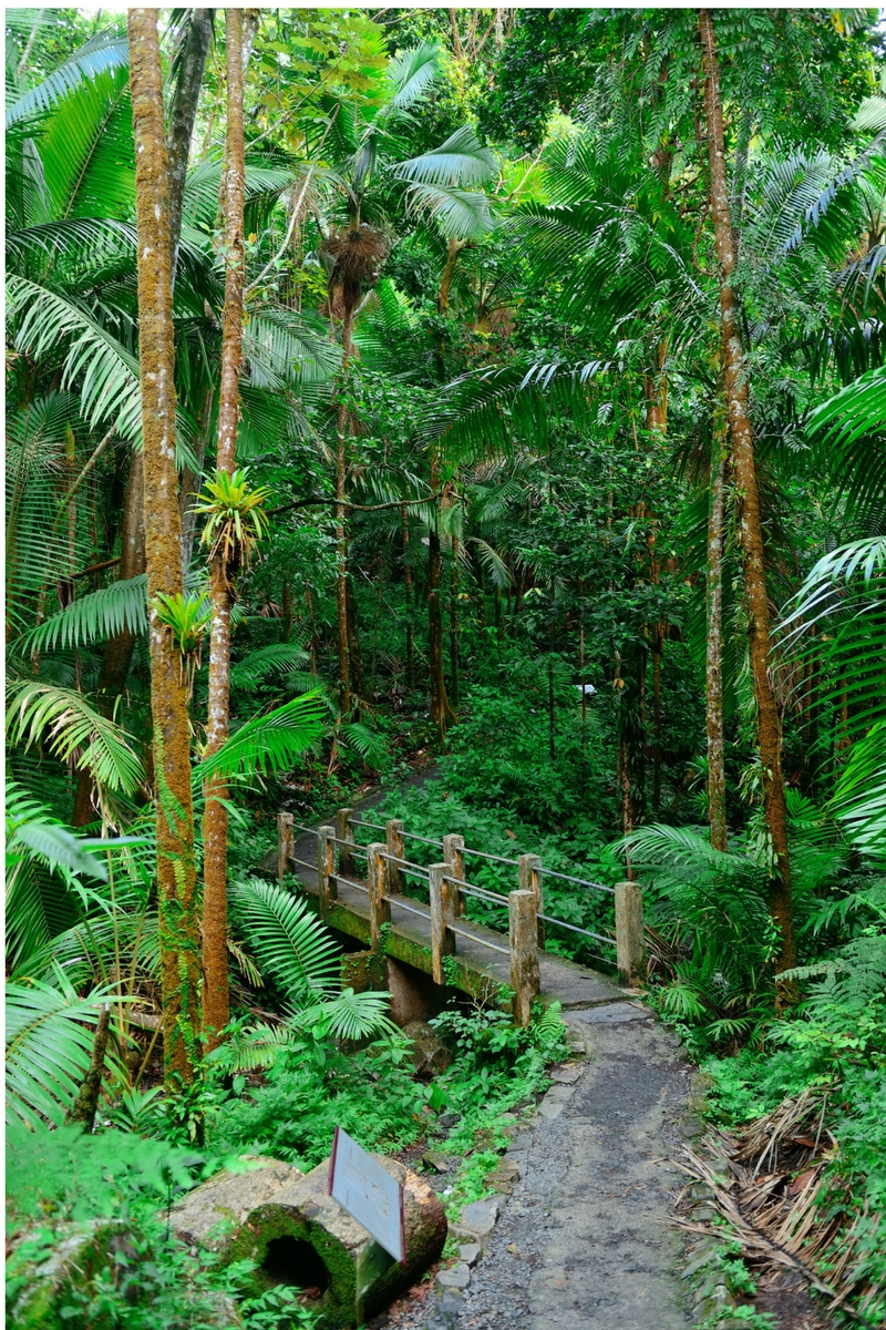 The Path Through the Tropical Rainforest
